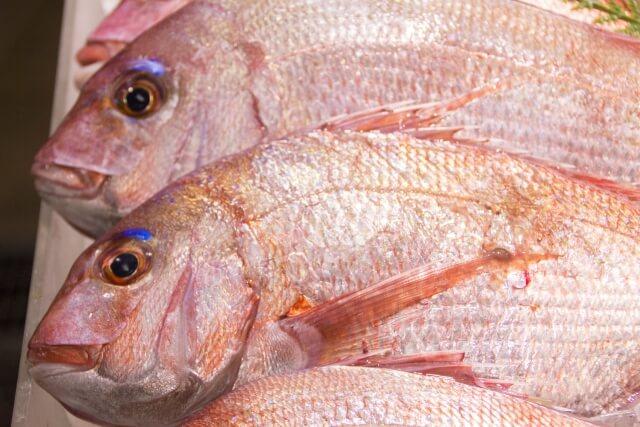 大漁に釣れた真鯛