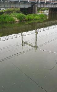 ブルーギルの好む池