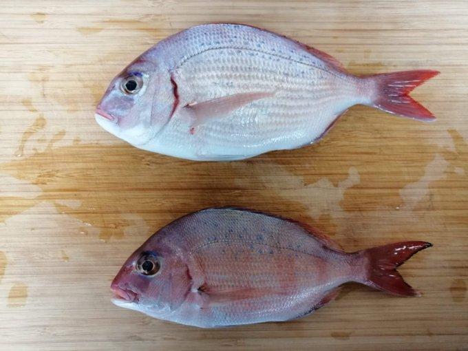 真鯛とチダイの比較