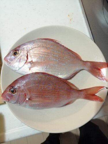 真鯛とチダイの違いを徹底分析!【見分け方・味の比較】
