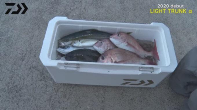 魚入りライトトランク