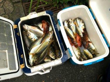 一番面白い釣りって?30年の釣り人生でどハマりした釣りをランキングで紹介