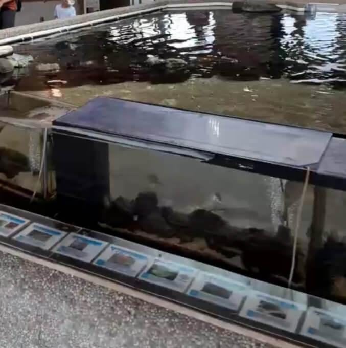 渚の駅の水槽